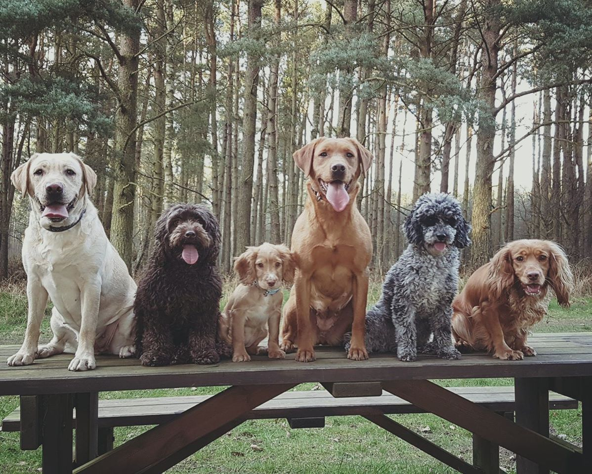 Some of the gang enjoying a walk in the forest