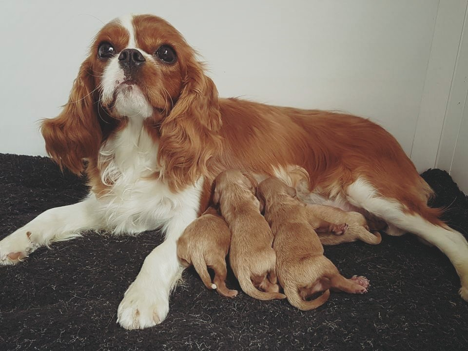 Disney with her newborn babies